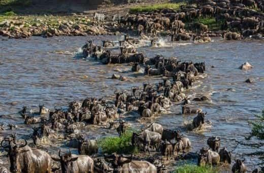 voyage de noces Tanzanie migration