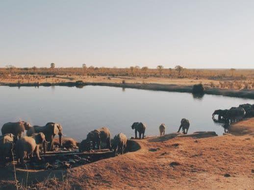 Avis de voyageurs Horizons Secrets animaux faune safari d'exception éléphants Mana Pools Hwange Zimbabwe