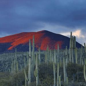 cactus Mexique voyage