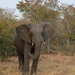 safari voyage surprise