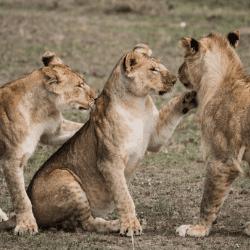 Safari & Observation de la faune