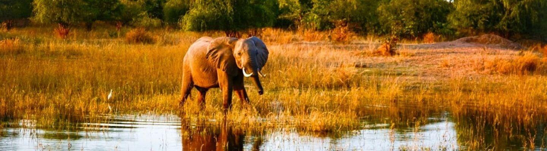 Voyage safari en Afrique éléphant