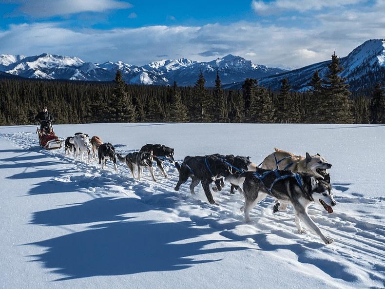 Canada chiens de traineaux voyage insolite