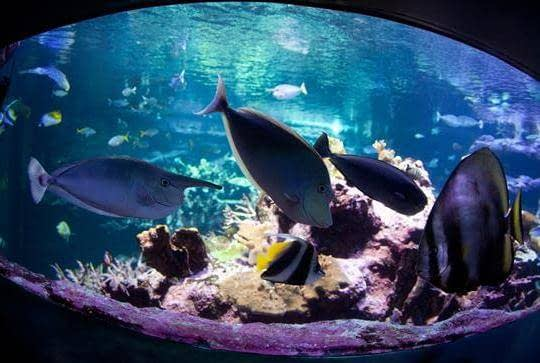 cité de la mer activité originale en famille