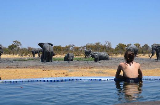 voyage de noces original Afrique safari éléphants
